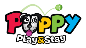 Puppy Play and Stay